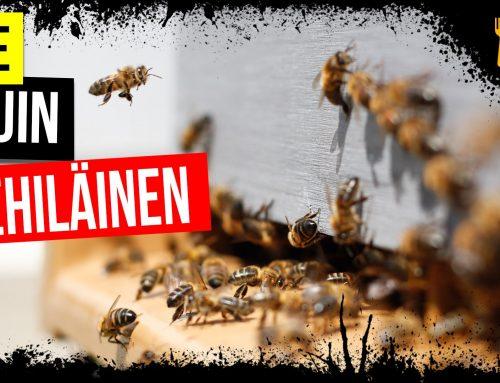 Ole Kuin Mehiläinen